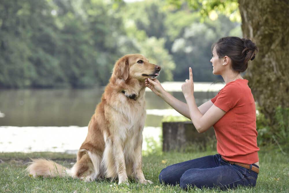 treinando cão surdo