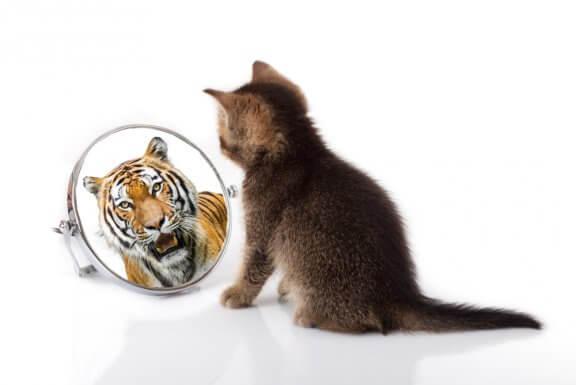 Semelhanças entre os gatos e tigres