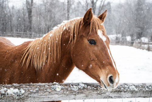 Cuide de seu cavalo no inverno