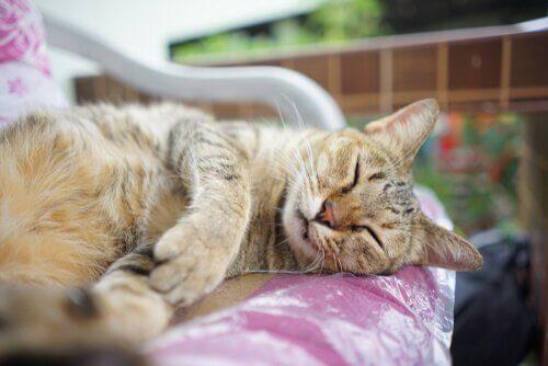 gato dormindo na cadeira