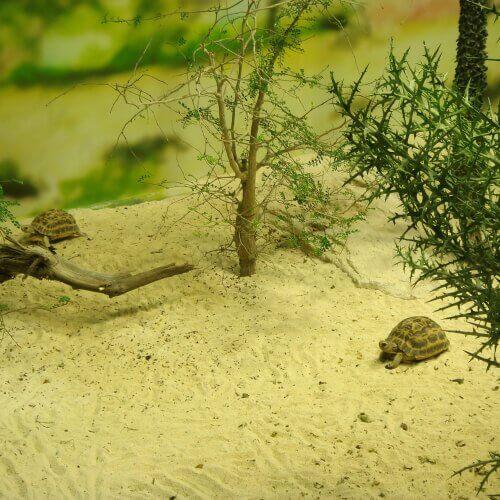 terrário para tartarugas