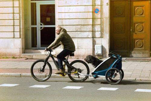 passear de bicicleta com cães
