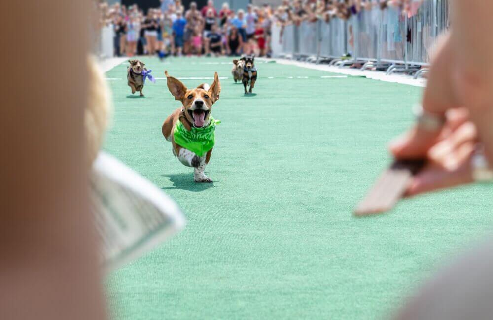 competições caninas