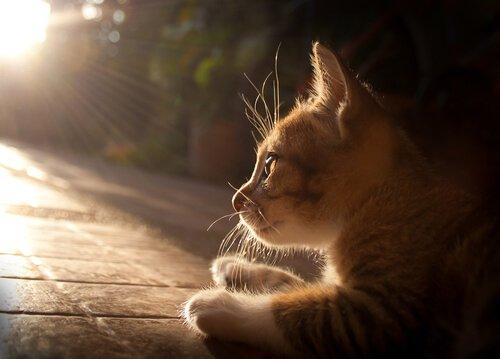 Gatinho recebendo banho de sol