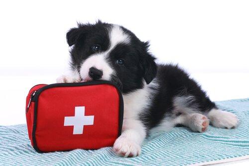 Acidentes com pets: saiba quais são os mais frequentes