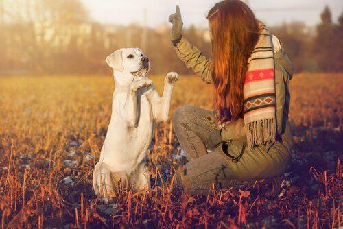 Adestramento para cachorros