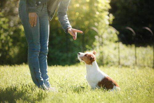 Por que é interessante adestrar os animais de estimação
