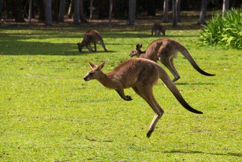 Os incríveis animais da Austrália