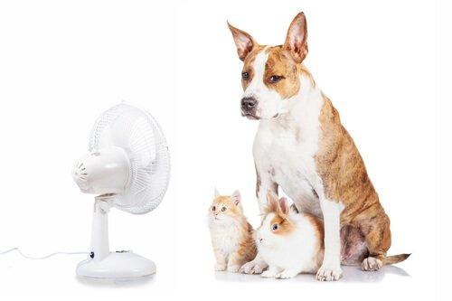 O ar condicionado e seu animal de estimação