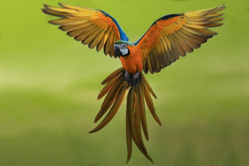 Aves como animais de estimação