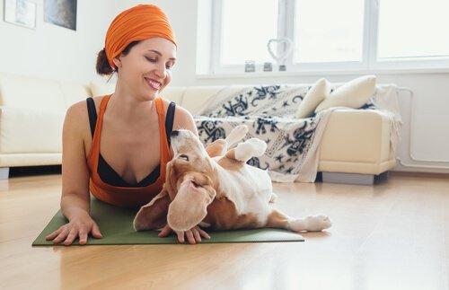 Benefícios do doga para cães