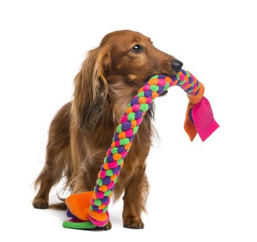 Cachorro com mordedor
