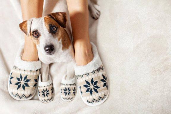 Como manter os animais de estimação aquecidos no inverno?