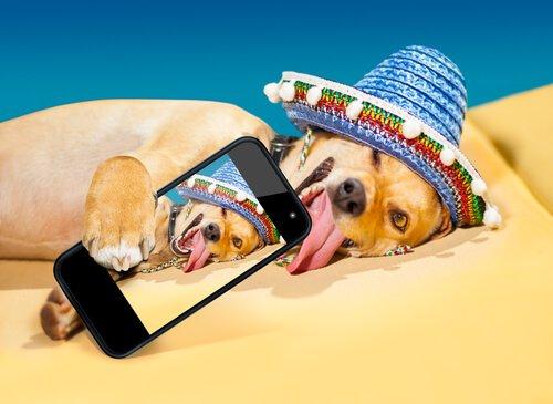 Você quer que seu cachorro fique famoso no Instagram?