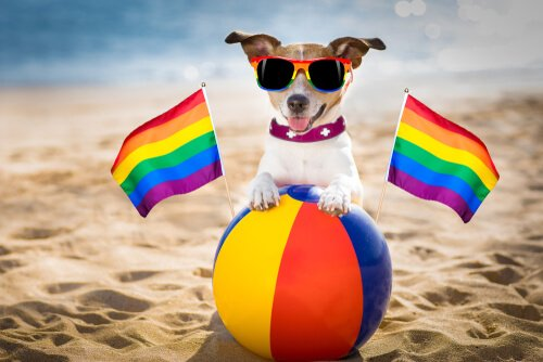 É possível que cachorros sejam homossexuais?