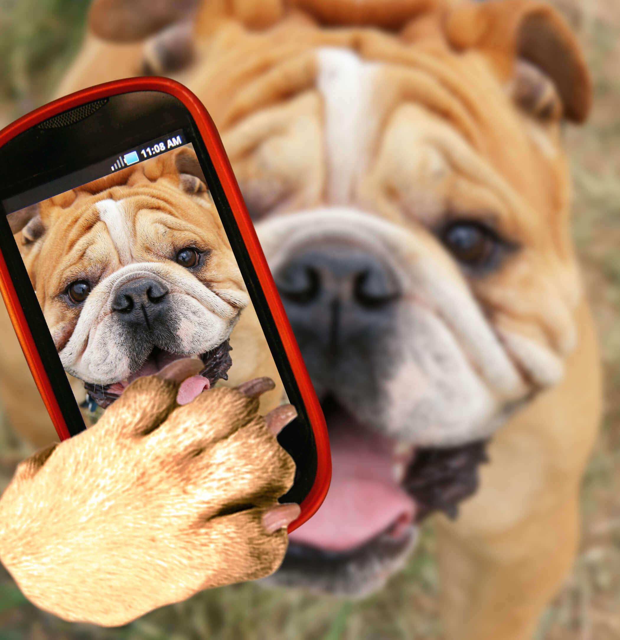 cachorro tirando selfie
