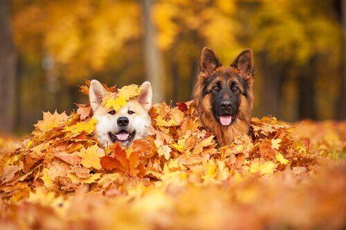 Passear com seu cachorro no outono: o que você deve saber