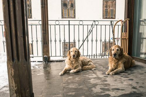 Cães descansando na varanda