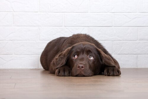 Coisas que o seu cão odeia e você não sabia