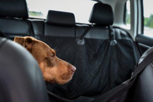 Capa de carro para cães