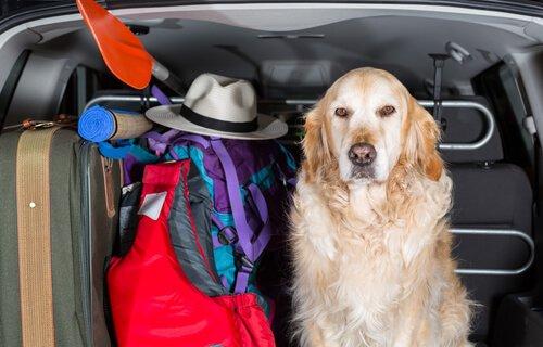 Capas de carro para cães: saiba mais!