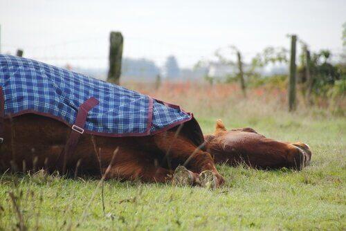 Cavalos dormem em pé ou deitados? Saiba aqui!