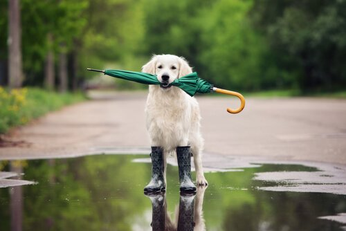 ensinar qualquer truque ao seu cão