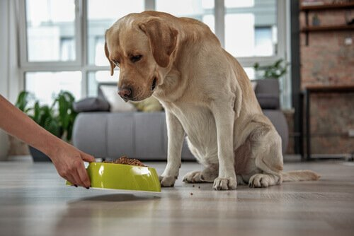 O que é o colesterol alto em animais de estimação?