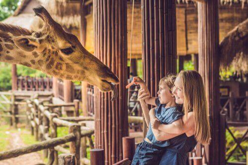 Mãe e filho alimentando girafa no zoológico