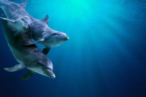 Como os golfinhos mergulham?