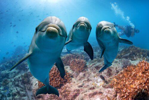 comunicação dos golfinhos