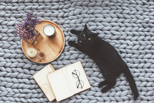 Contos sobre gatos na literatura