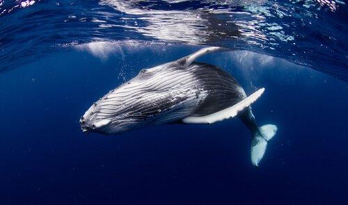 Curiosidades sobre as baleias