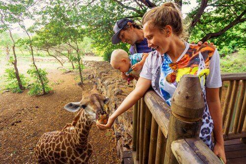 Dar comida aos animais no zoológico é perigoso?