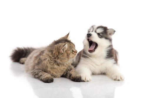 Queda de dentes em cães e gatos