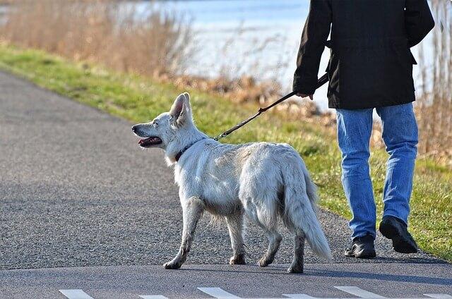 Homem passeando com cachorro