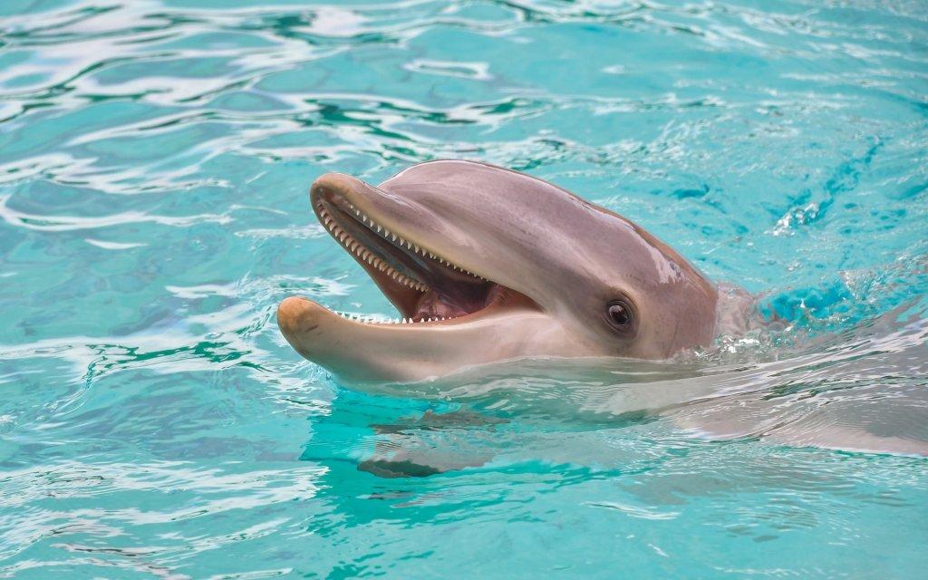 Conheça os cetáceos do Mar Mediterrâneo