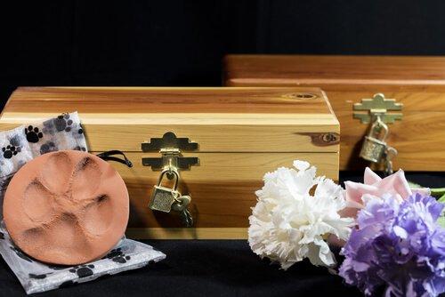 6 dicas para enfrentar a morte do seu animal de estimação
