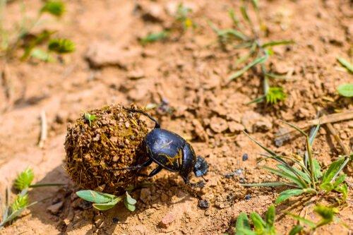 O estranho escaravelho