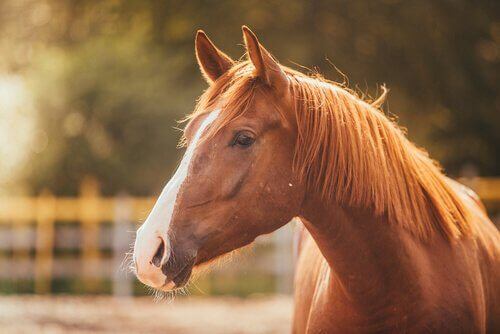 O estresse no cavalo