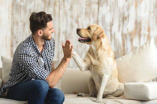 Consulta etológica para animais de estimação, saiba mais.