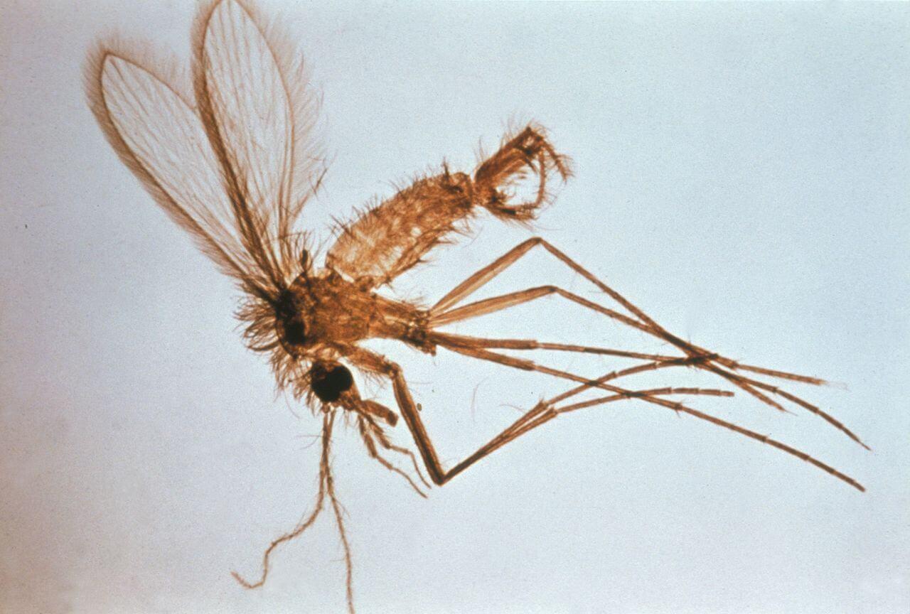 Doenças transmitidas por insetos