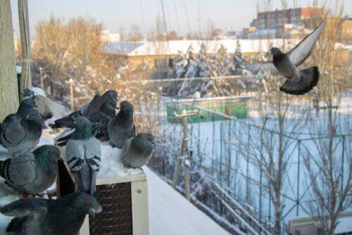 7 maneiras de afastar os pombos
