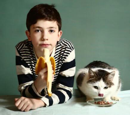 Conheça as frutas que os gatos podem comer