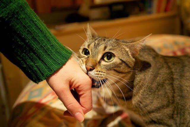 Doenças que podem ser transmitidas pelos gatos