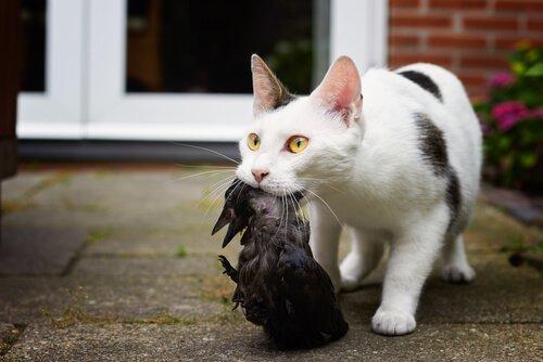 Técnica de caça do seu gato: você sabe qual é?