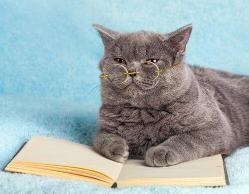 Contos sobre gatos: literatura e animais