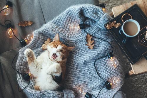Gato com sono, cercado de luzes e folhas do outono