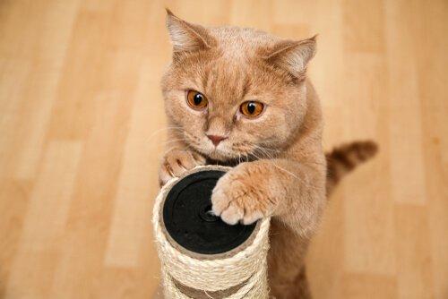 Gato e seu arranhador