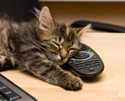 Gato dormindo em cima de controle remoto
